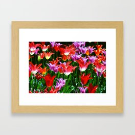 Beautiful triumph tulips of different colors with green leaves Framed Art Print
