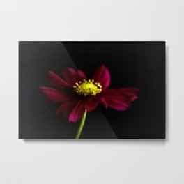 Elegance of a Cosmo Metal Print