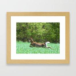 Run Forest Run Framed Art Print