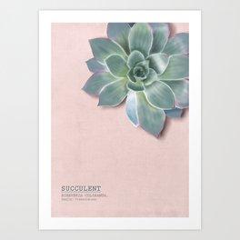Succulent. rosé.en Art Print