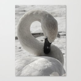 S is for Swan by Teresa Thompson Canvas Print