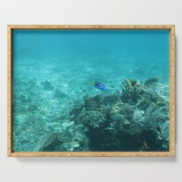 Dory (Blue Tang) Serving Tray
