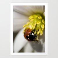 Lady Bird on Pollen Art Print