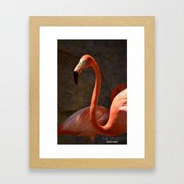 Vibrant plumage Flamingo Framed Art Print