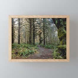 Rainforest Adventure II Framed Mini Art Print