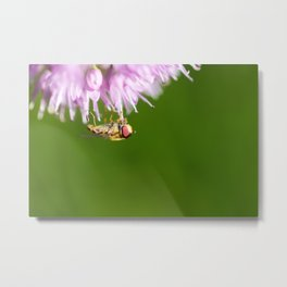Hoverfly on Allium - Onion Flower 3 Metal Print