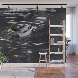 Mallard Duck Wall Mural