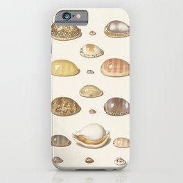 Vintage Seashell Chart I iPhone Case