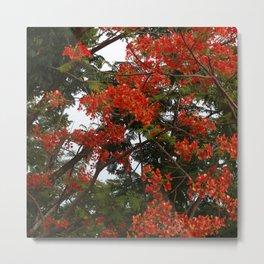 Flame Tree v.2 Metal Print