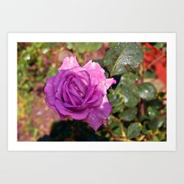 Sardinian Rose Poetry Art Print