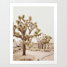 Pale Desert 2 - Joshua Tree Cactus Landscape Photography Art Print