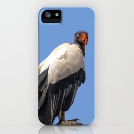 King Vulture Perched on a Branch iPhone Case