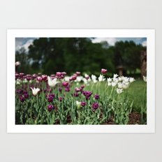 Film -- Tulips Art Print