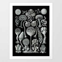Ernst Haeckel - Mycetozoa (black) Art Print