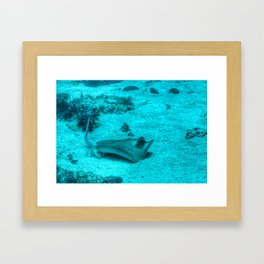 Sting ray taking a bath Framed Art Print