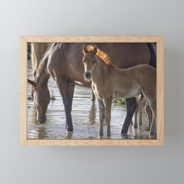 Colt with Raccoon Eyes and a Mane Like a Flame Framed Mini Art Print