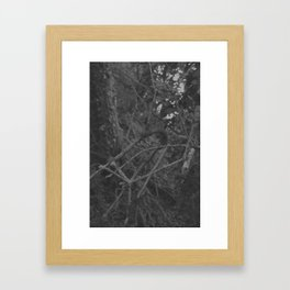 Dark and scary forest Framed Art Print