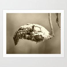 dead bud Art Print