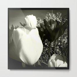 Tulips in Spring New Westminster B.C. Metal Print