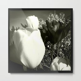 Tulips in Spring New Westminster B.C. Metal Print