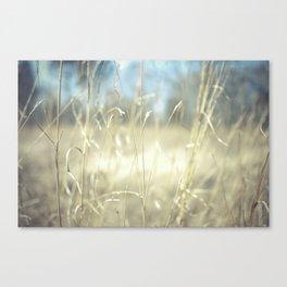 November Field  Canvas Print