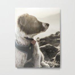 Rowen, the Collie Pup Metal Print