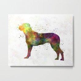 Italian Corso Dog in watercolor Metal Print