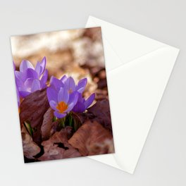 Concept nature : Fera lilium Stationery Cards