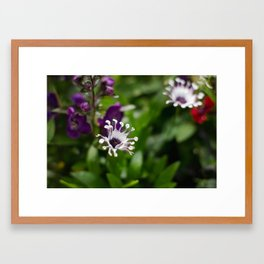 flowers. Framed Art Print