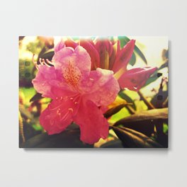 Pink Rhododendron Metal Print