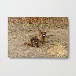 Cute Racoon Couple Metal Print