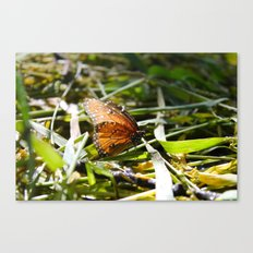 Beauty in a Small Life Canvas Print
