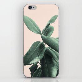 Ficus Elastica #25 #SummerVibes #foliage #decor #art #society6 iPhone Skin
