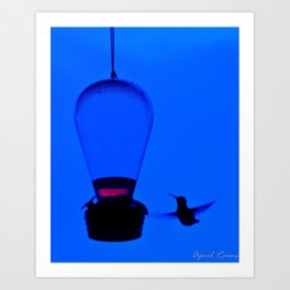 Blue Hummer In Flight Art Print