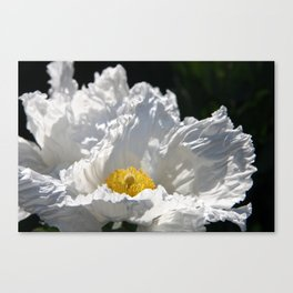 Poppy - White Canvas Print
