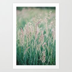 Grass II Art Print