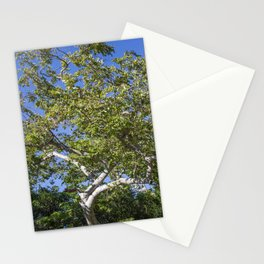 Marian Park Stationery Cards
