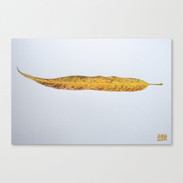 Salix Babylonica - 8 Nov Canvas Print