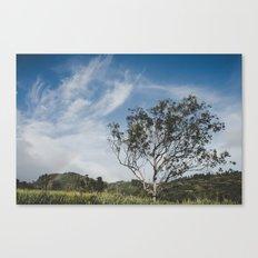 Rainbow and Tree of Life - Hawaii Canvas Print