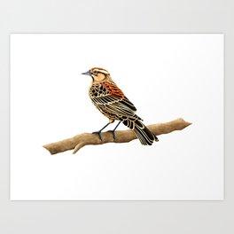 Red-winged Blackbird Female Art Print
