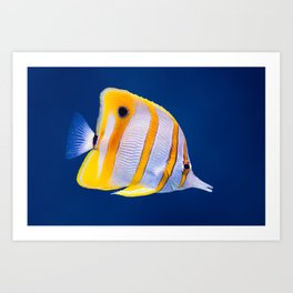 Copperband butterfly fish Art Print