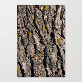 Tree Bark 1 Canvas Print