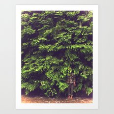 Prairie Redwoods Fern Gully Art Print