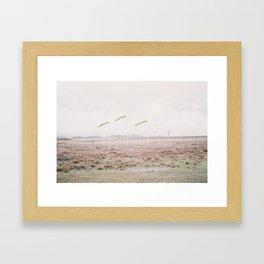 Western Cape Wind Socks Framed Art Print