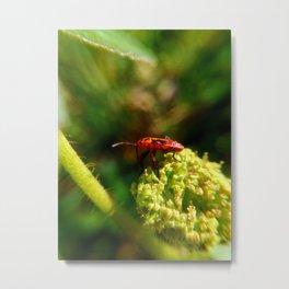 Bug- Dysdercus Metal Print