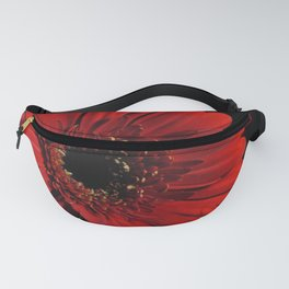 Red Gerber daisy on Black Fanny Pack