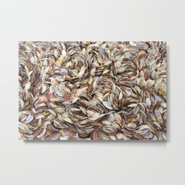 Scallop Shells Metal Print