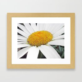 White and Curly #2 Framed Art Print