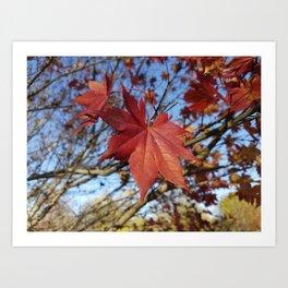 Maple leaf center stage Art Print