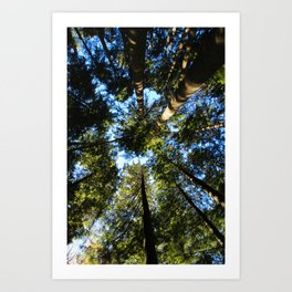 tree up shot Art Print